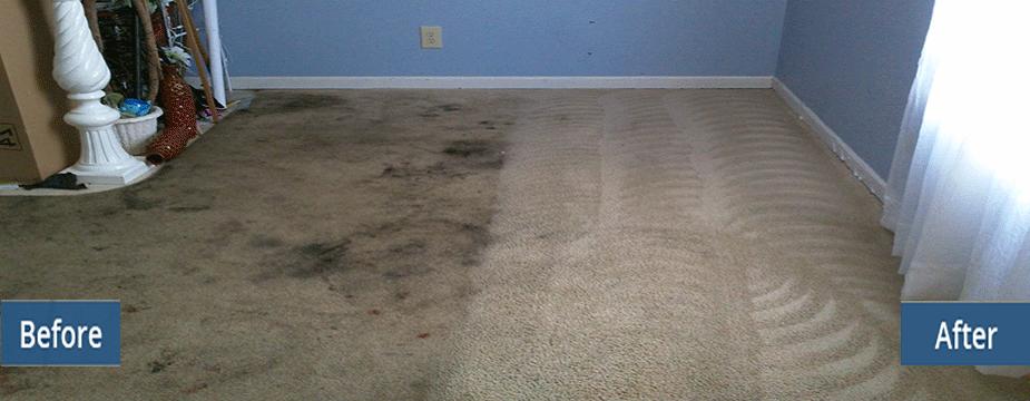 Blog - Mike Bryan Carpet Cleaning